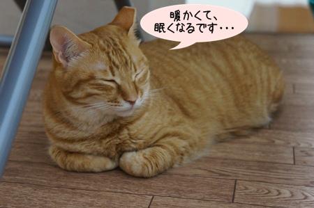 眠くなる・・・