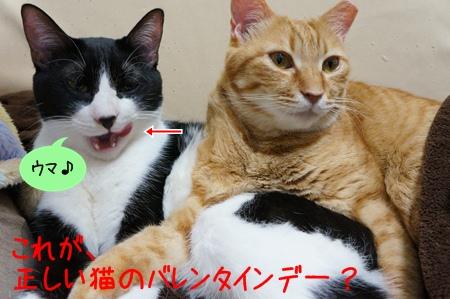猫のバレンタインの過ごし方