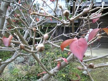 江戸屋の庭2
