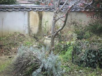 江戸屋の庭3