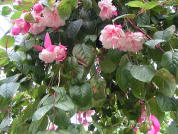 広島植物園