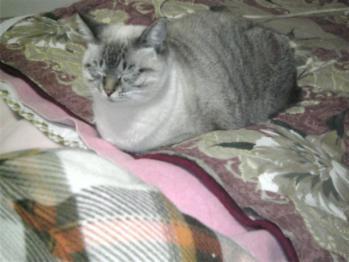 チャム姫寝