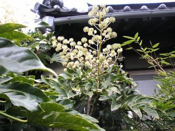 江戸屋の庭4