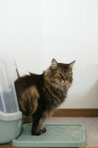 失礼。トイレ中のねねです