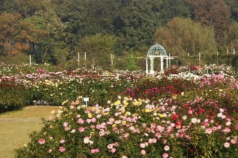 京成ばら園 全景2