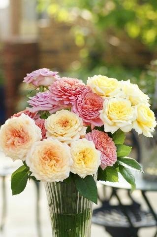 薔薇の切花