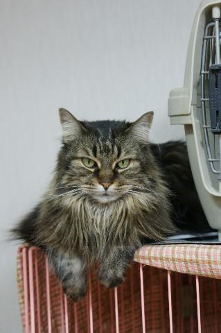 ねねちゃん、猫ゲージの上