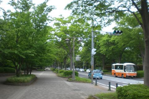 柏の葉11