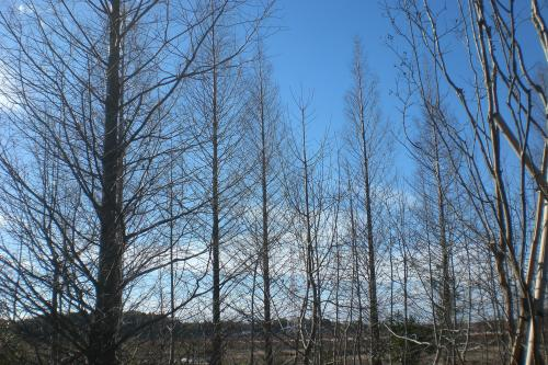 里山の冬1