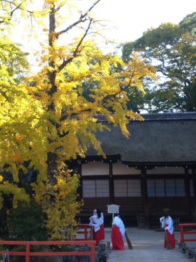 神社の朝掃除