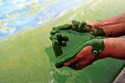 中国、汚染で緑に染まる湖