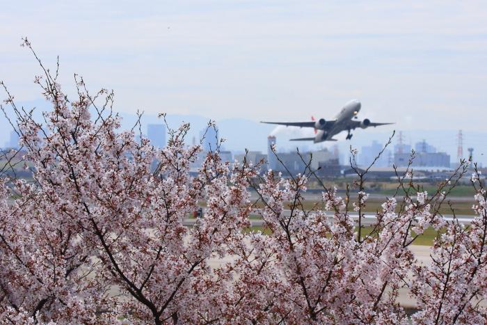 下河原緑地公園の桜&JAL B777-246 JAL110@下河原緑地公園(by 40D with EF100-400/4.5-5.6L IS)