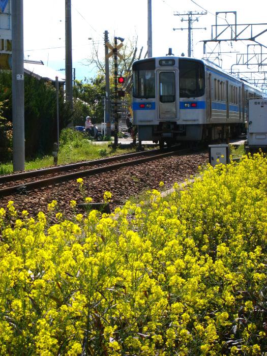 予讃線普通電車と菜の花@愛媛県西条市(by IXY DIGITAL 910IS)