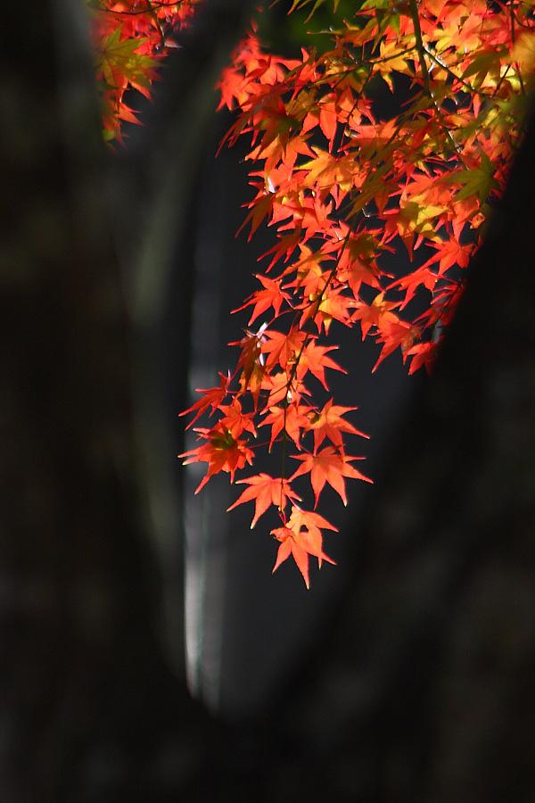 2010年・満願寺の紅葉4@川西市・満願寺境内(by EOS40D with EF90-300/4.5-5.6)