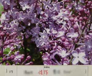 P5303989.jpg