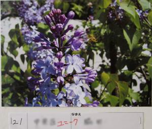 P5303997.jpg