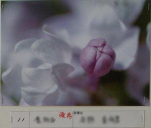 P5304003.jpg