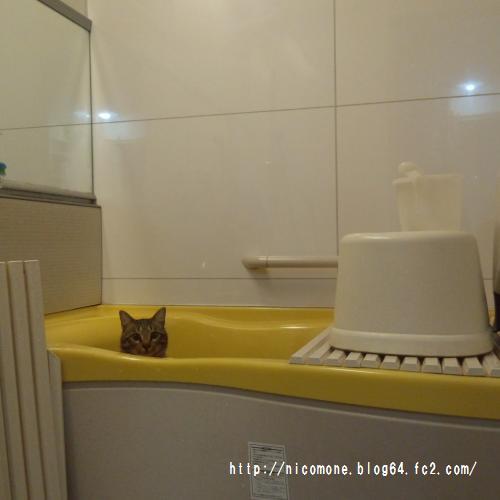 あきお風呂
