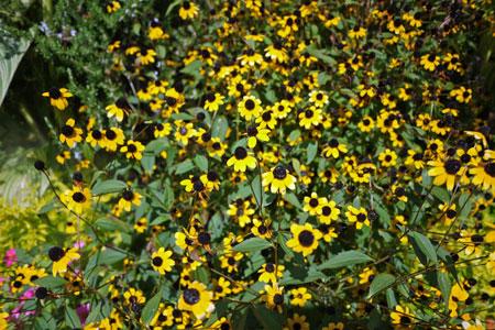 flower27.jpg