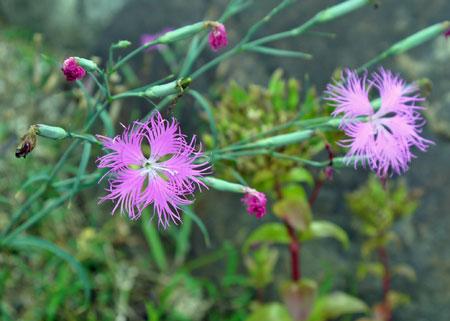 flower43.jpg