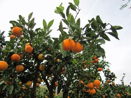 orange-road2.jpg