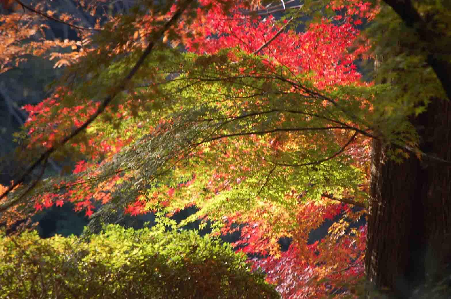 20111207新宿御苑 056A