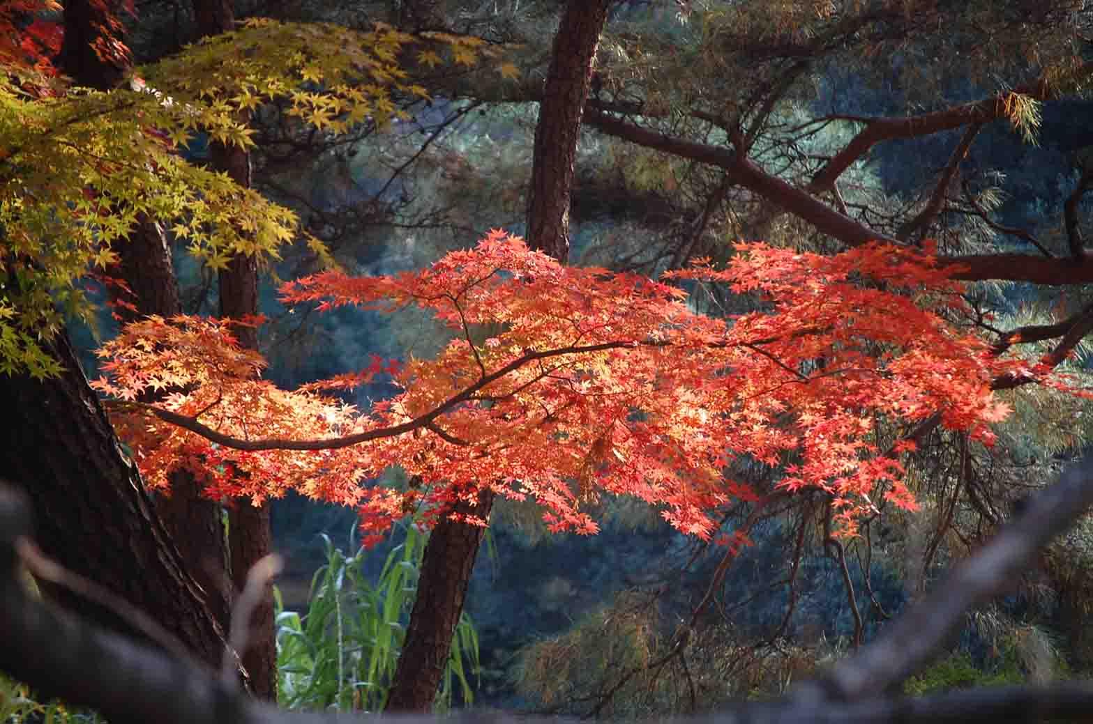 20111207新宿御苑 061A