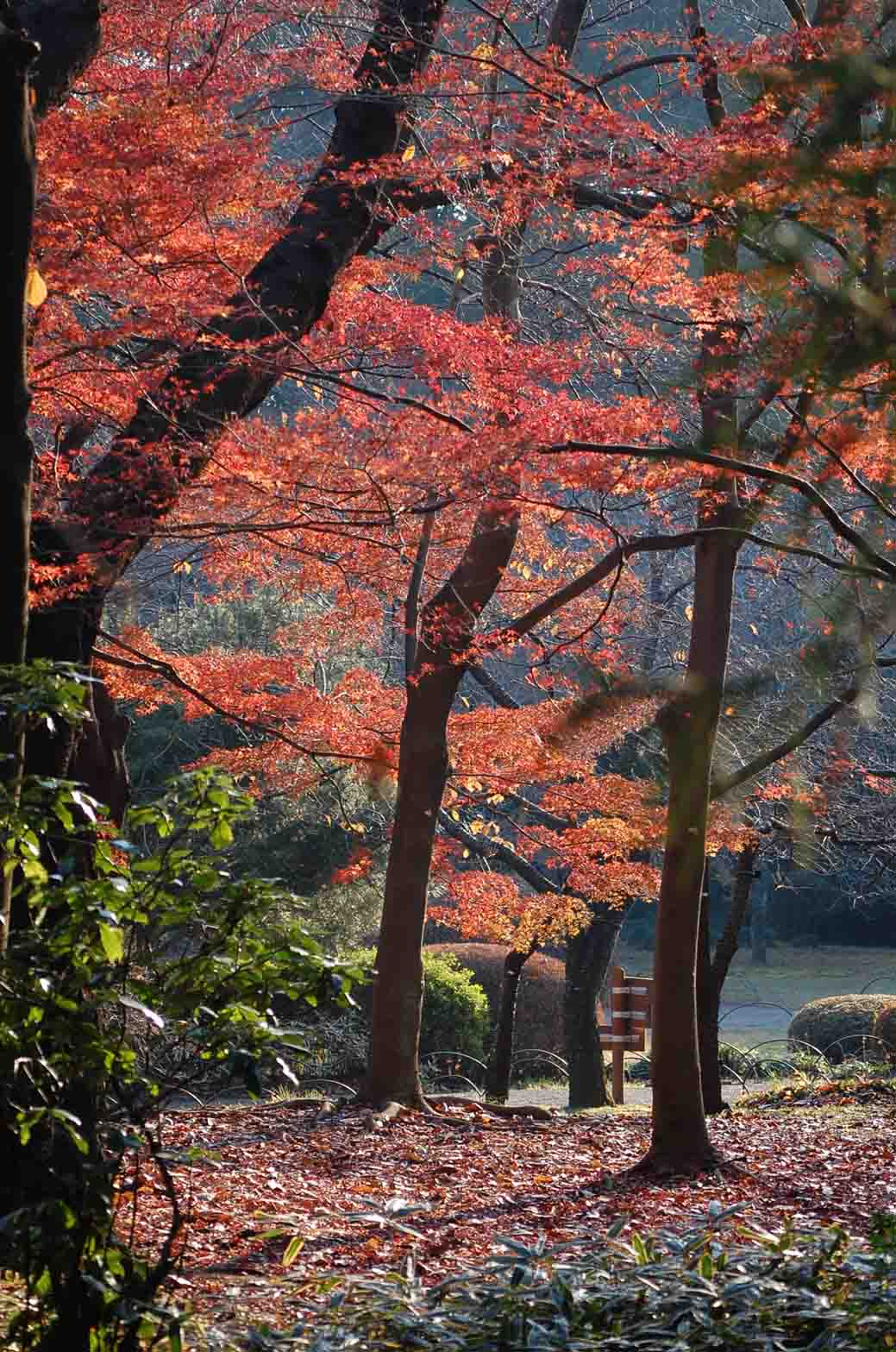20111221新宿御苑 001A