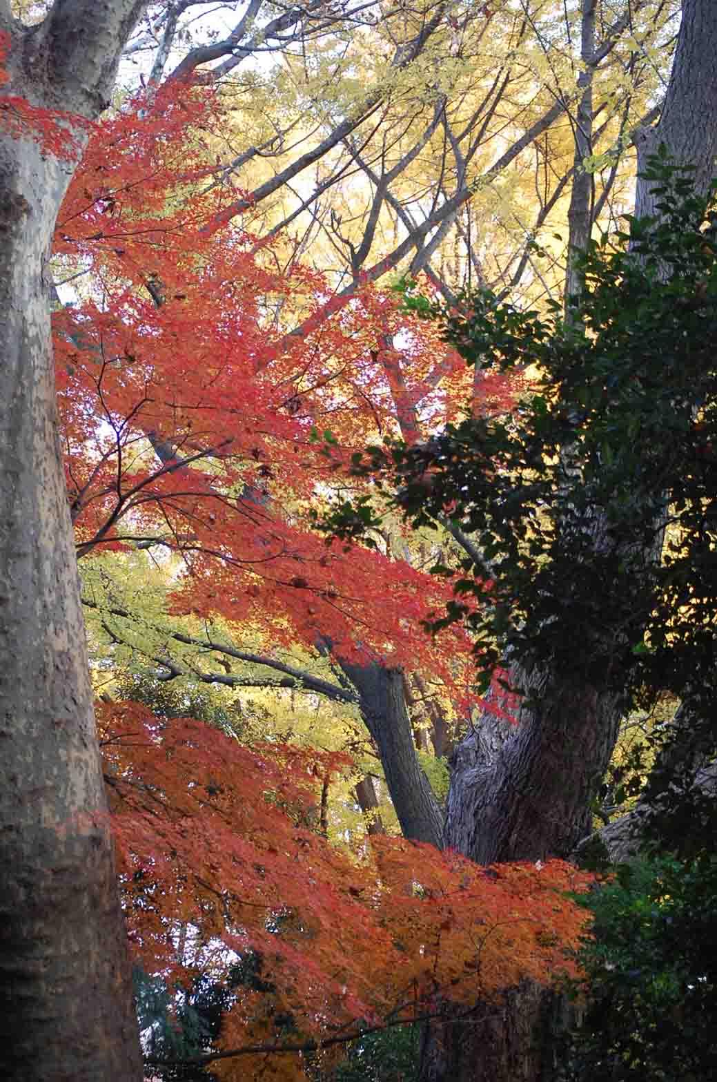 20111221新宿御苑 052A