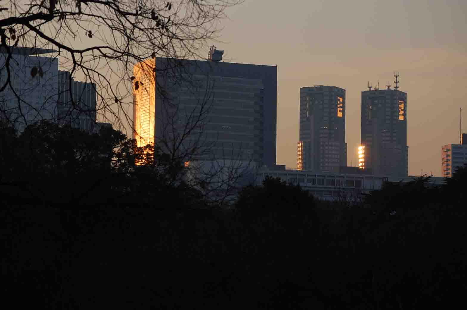 20111221新宿御苑 063A