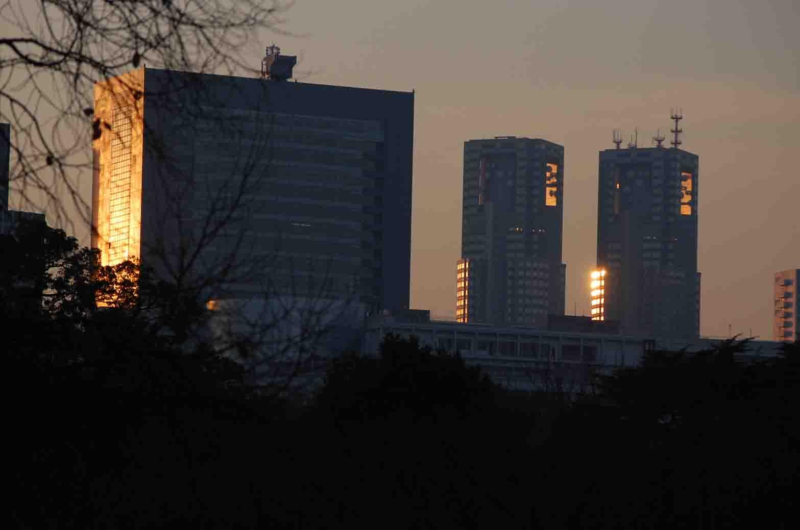 20111221新宿御苑 060A