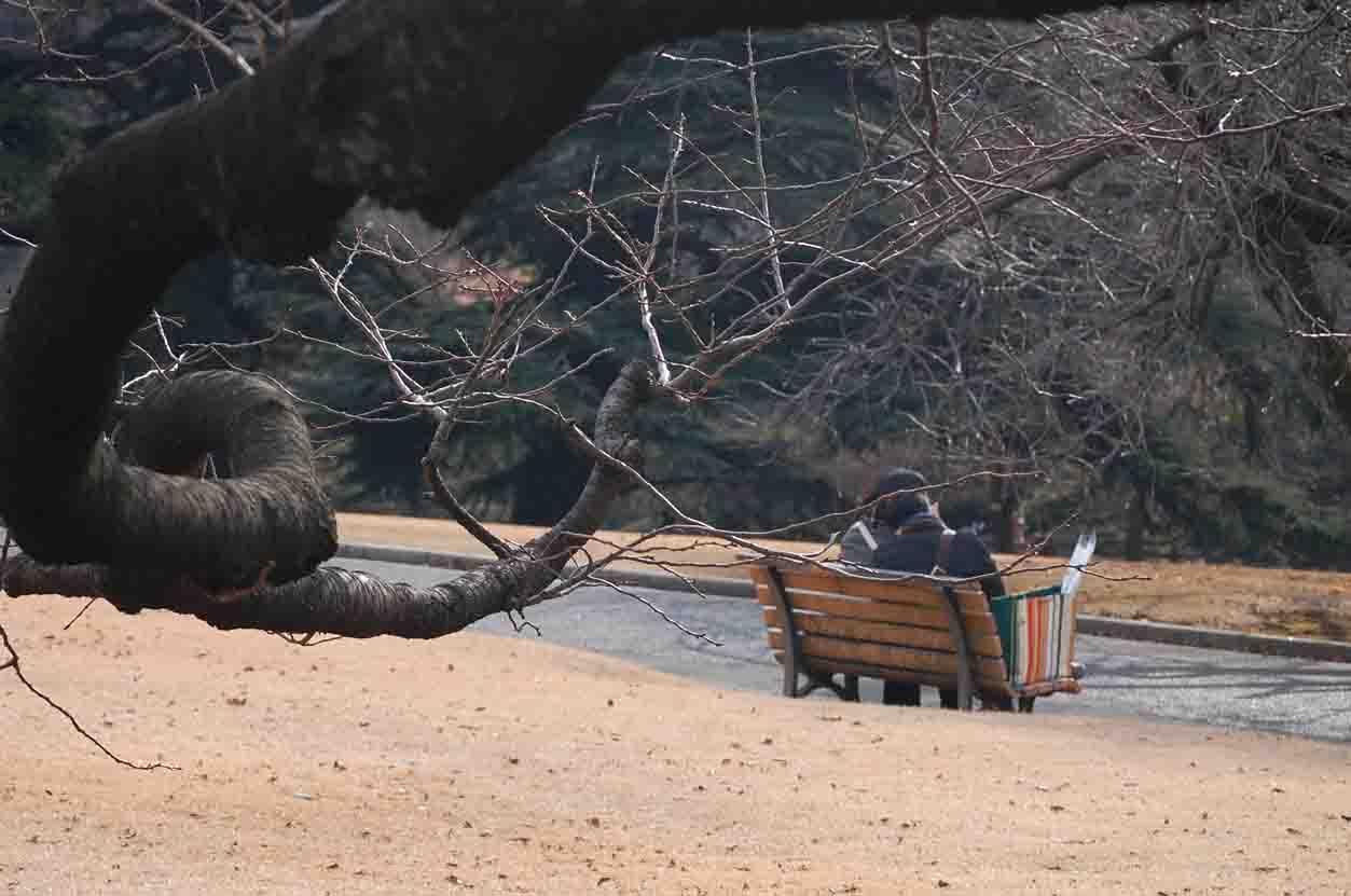 20120104新宿御苑 002A