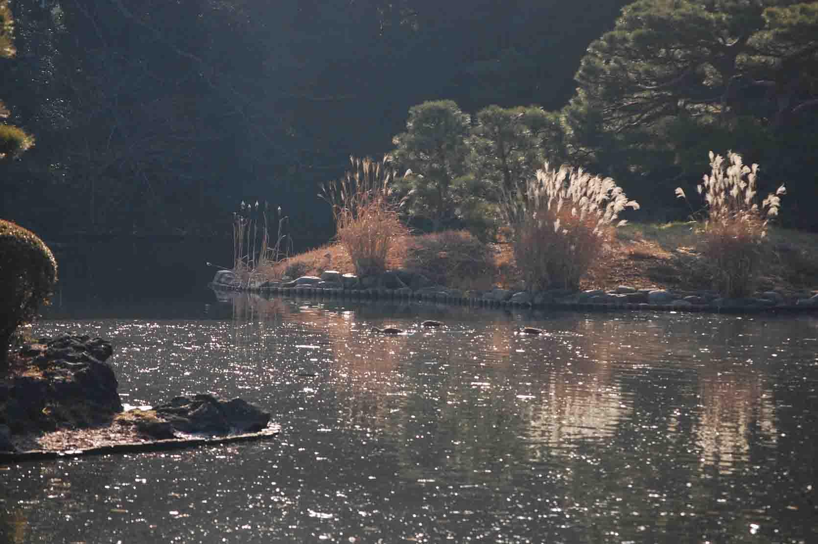 20120111新宿御苑 003A