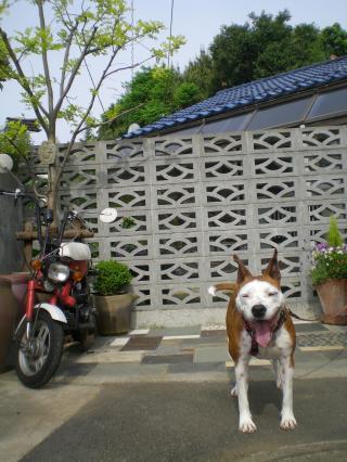006_convert_20100504084151.jpg