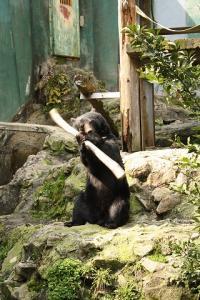 2010.03.28 動物園 239