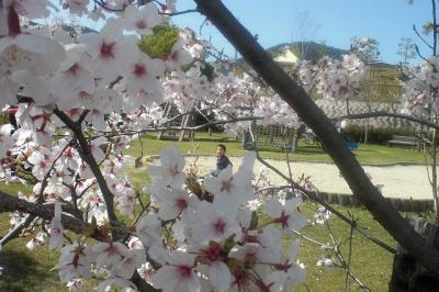 2010.04.08 みどり坂公園 041