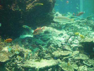 2010.09.05 沖縄旅行 022