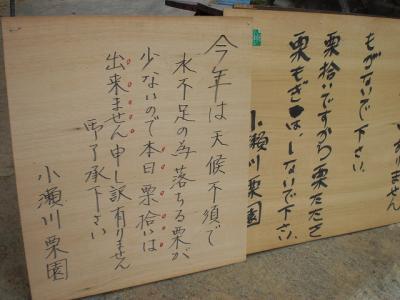 2010.09.26 栗拾い 026