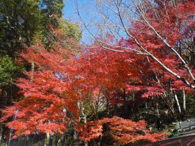 2010.11.24 三滝寺 025