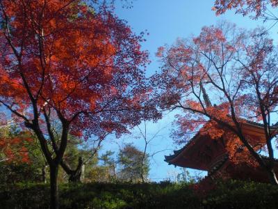 2010.11.24 三滝寺 004
