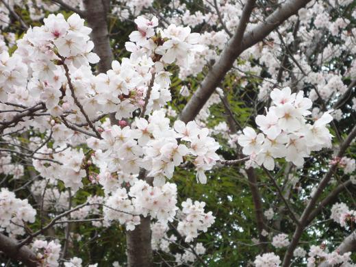 2013.03.29 空城山公園 050
