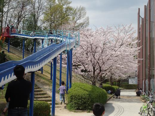 2013.03.31 桜 053