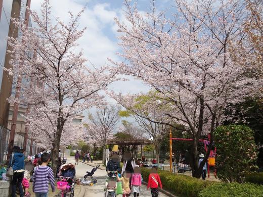 2013.03.31 桜 061