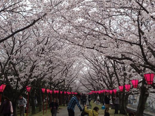 2013.03.31 桜 118