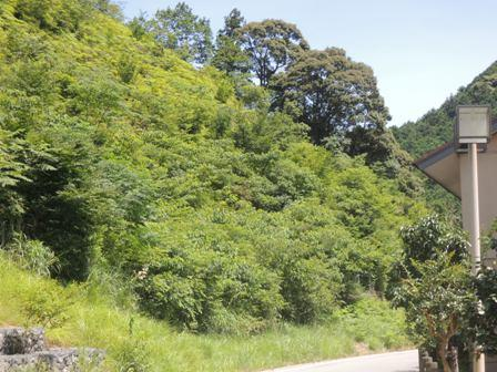 浦谷の山全景DSCN0374