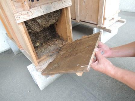 2番目の巣箱の蓋を開ける
