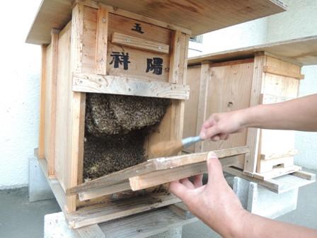 ハチを奥へ追い込む