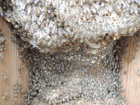 巣の拡大写真