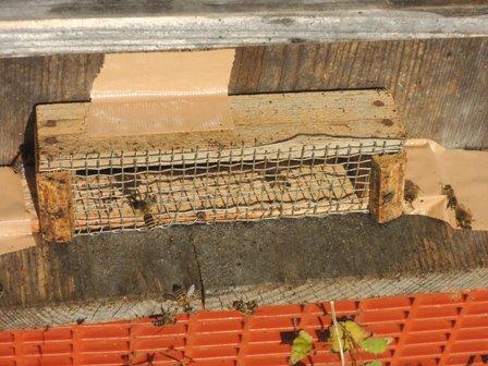 3スズメ蜂対策DSCN0977