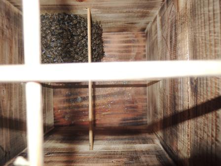 4.箱の中DSCN1133